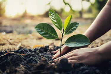 Ações e práticas sustentáveis para o melhor da sua empresa